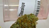 Chocolope Strain Review by 420Cali