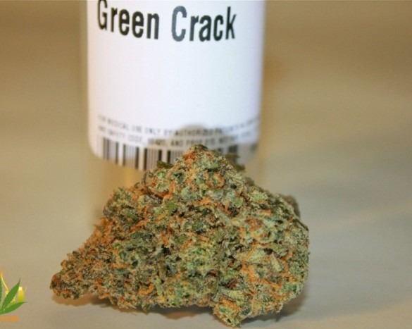 green crack strain review my mmj